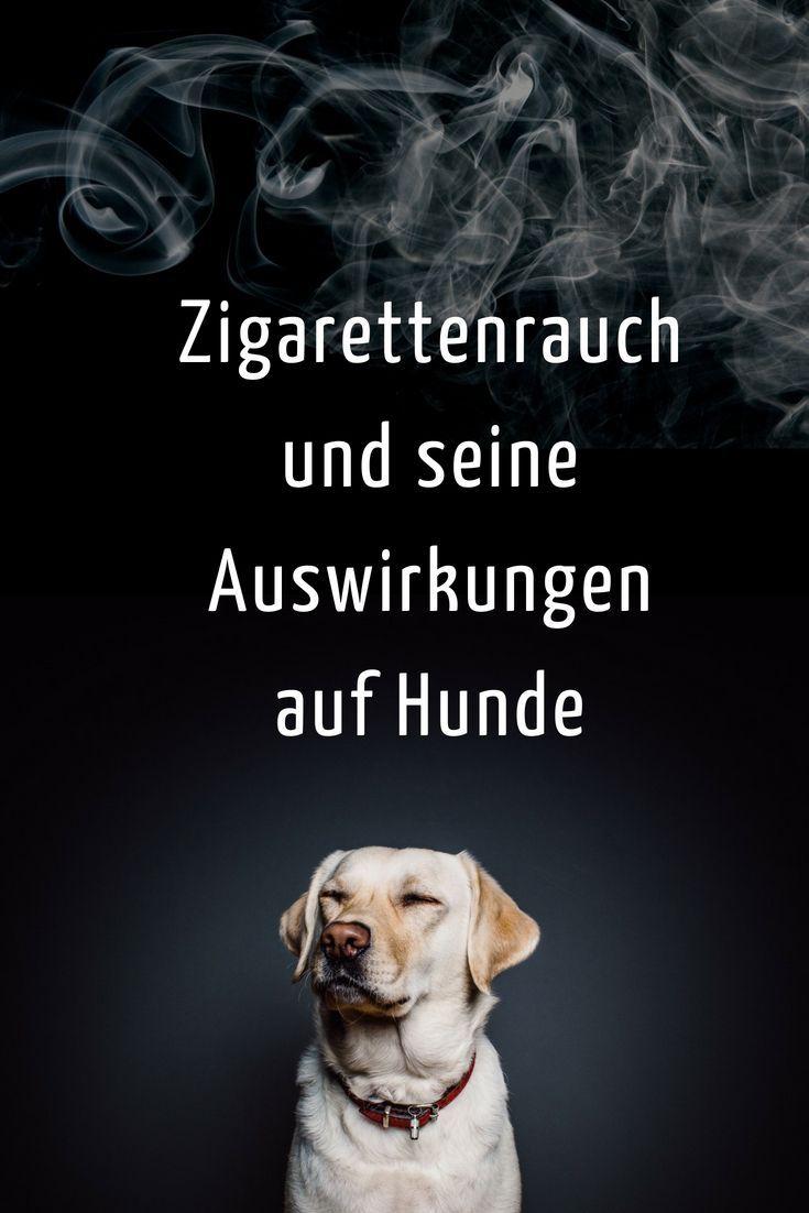 Passivrauchen Totet Haustiere Gesunde Hunde Hunde Und Haustiere