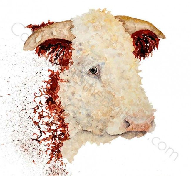 """""""Seargent Major"""" Hereford Bull water colour on canvas ready to hang"""