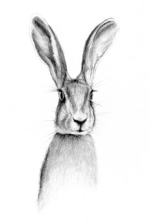 rabbit  illustration  hare  drawing  hare by NayanaIliffe on Etsy