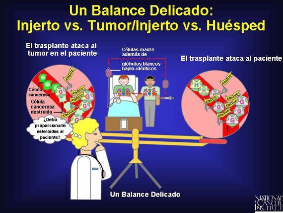 Un riesgo con los trasplantes haplo-idénticos es que permiten que ocurra un ataque contra los tejidos del paciente. Esto puede ocurrir cuando las células inmunes maduras de un donador, conocidas como células T, contaminan el injerto de células madre. Para minimizar este riesgo, los investigadores algunas veces reducen por completo todas las células T del trasplante, dejando al injerto con células madre solamente.