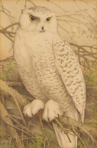 art-and-things-of-beauty:    Jan Voerman jr (1890-1976) - Snowy owl (Bubo scandiacus), watercolour.
