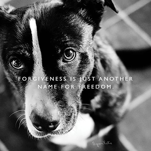 Forgiveness is just another word for freedom. - Byron Katie