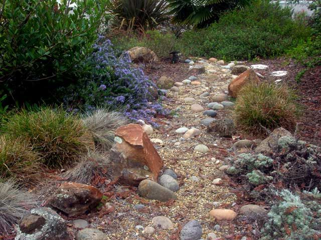 17 best images about nancy mike 39 s drought tolerant yard for California native landscape design