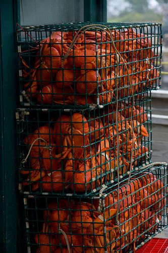 Thurston Lobster Pound Southwest Harbor, Maine | Flickr - Photo Sharing!