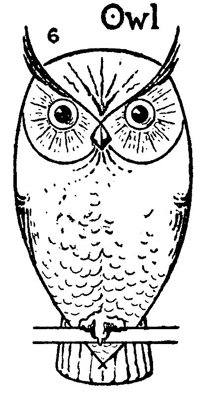 How to draw an Owl step by step - Simple Owl drawing 6