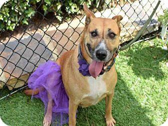 9/13/16 Labrador Retriever Mix Dog for adoption in Atlanta, Georgia - FOXIE