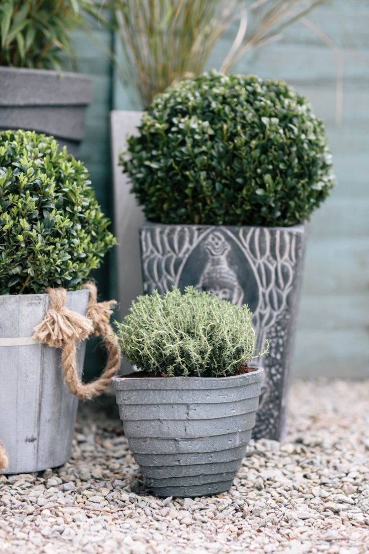 Wooden barrels give your garden a classic style look! http://www.woodies.ie