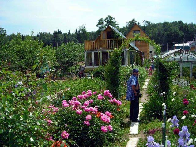 Az orosz organikus kiskertes tanyák (dácsák) mozgalmának története - Greenr - A…