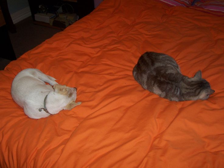 Georgie and Bella #pets #dogs #cats