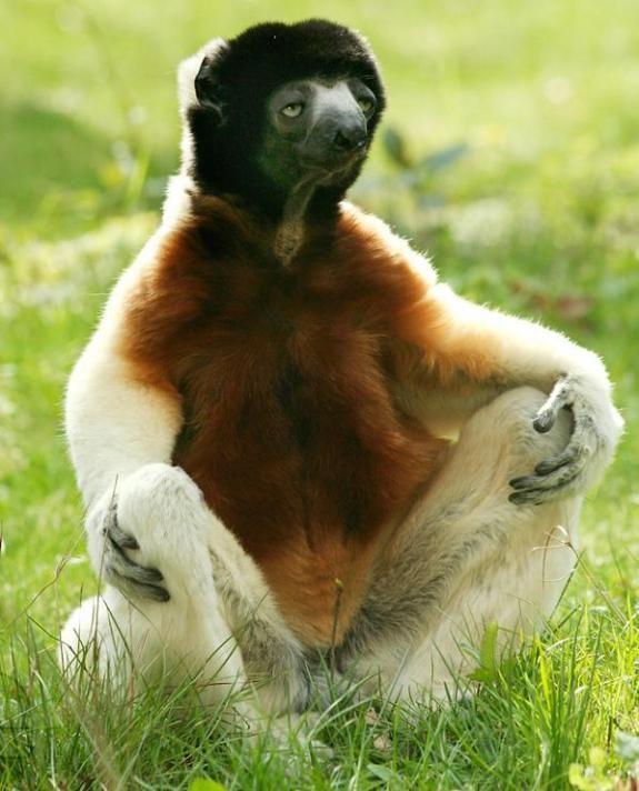 10 animal yoga poses...by animals #yoga