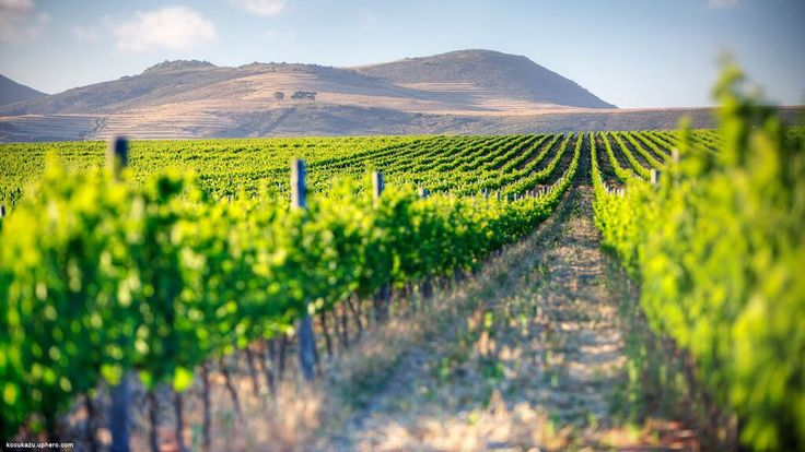Pressed for time? Get the best of Stellenbosch #wines on a whistle-stop tour like this: