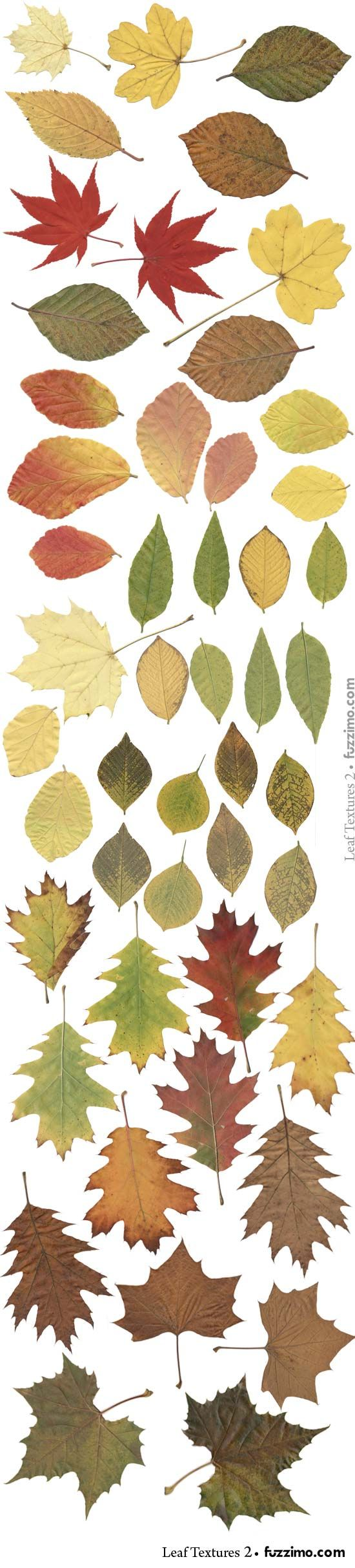More leaf images from Fuzzimo.comfzm-Leaf-Textures-(2)-02.jpg 550×2,425 pixels …