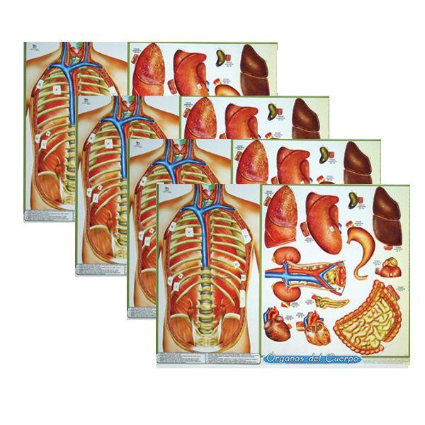 Pack Órganos Del Cuerpo -> http://www.masterwise.cl/productos/6-ciencias/20-pack-organos-del-cuerpo