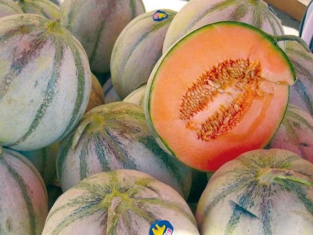 Melons de Cavaillon, Provence www.provence-tourismus.de