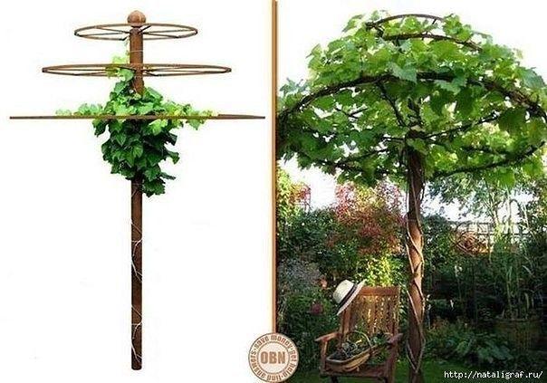 Живой зонт от солнца, увитый диким виноградом - чудесное местечко и практически дизайнерское решение))