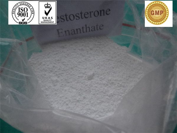 Testosterone Enanthate/ bodybuilding / Testosterone Steroid Hormone / CAS 315-37-7 (400.59) - China Testosterone Enanthate;Primoteston De...