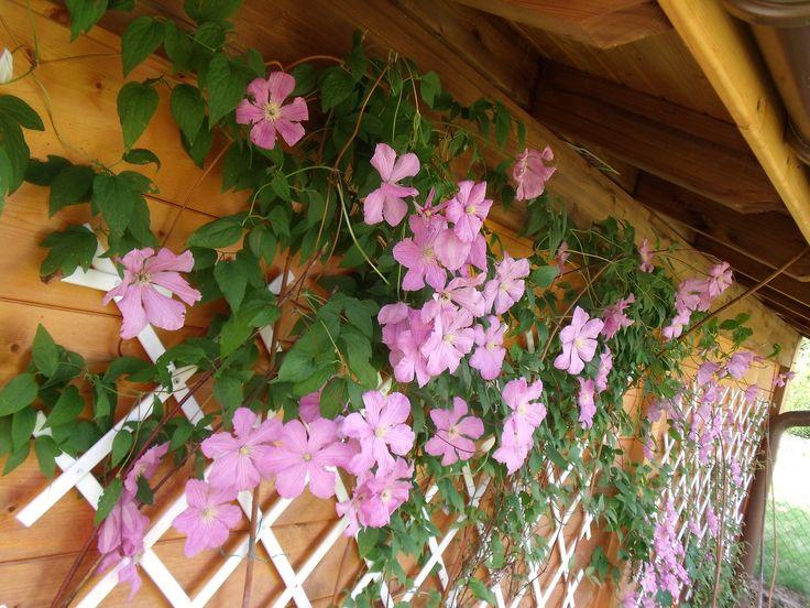 Floralies...