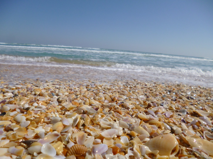 Sea Shells Daytona Beach The Best Beaches In World