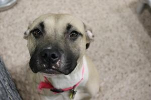 Dogs To Adopt In Erie Pa
