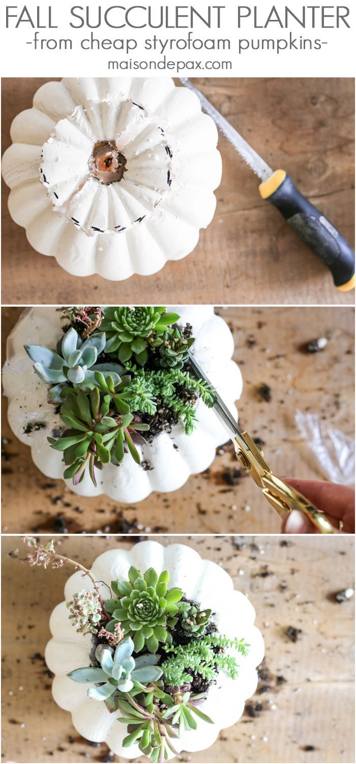 Looking for simple, easy fall decor? Try these fall succulent planters! A simple pumpkin vase makes for beautiful DIY fall decor.
