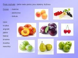 Výsledek obrázku pro hruška ovoce pracovní listy