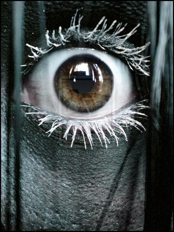 Awesome & Terrifying Horror Photography
