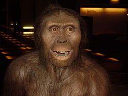 AUSTRALOPITHECUS  También vivió en el Este y Sur de África.Tenían un cerebro pequeño, de tamaño parecido al de un chimpancé (unos 500 cc3), eran bípedos, aunque todavía trepaban a los árboles, no eran demasiado grandes, eran vegetarianos, no fabricaban herramientas y sus manos y pies se parecían bastante a los del ser humano actual.