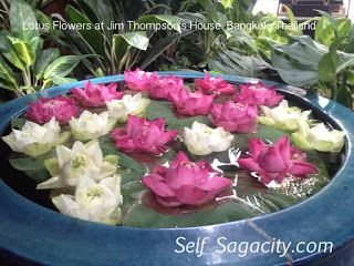 how to grow a lotus flower indoors
