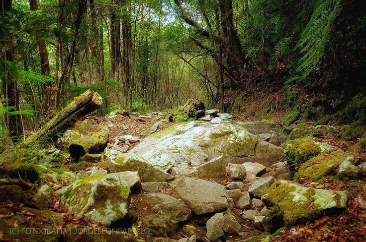 Sendero y piedras - Valle de Cochamo (Patagonia -Chile)