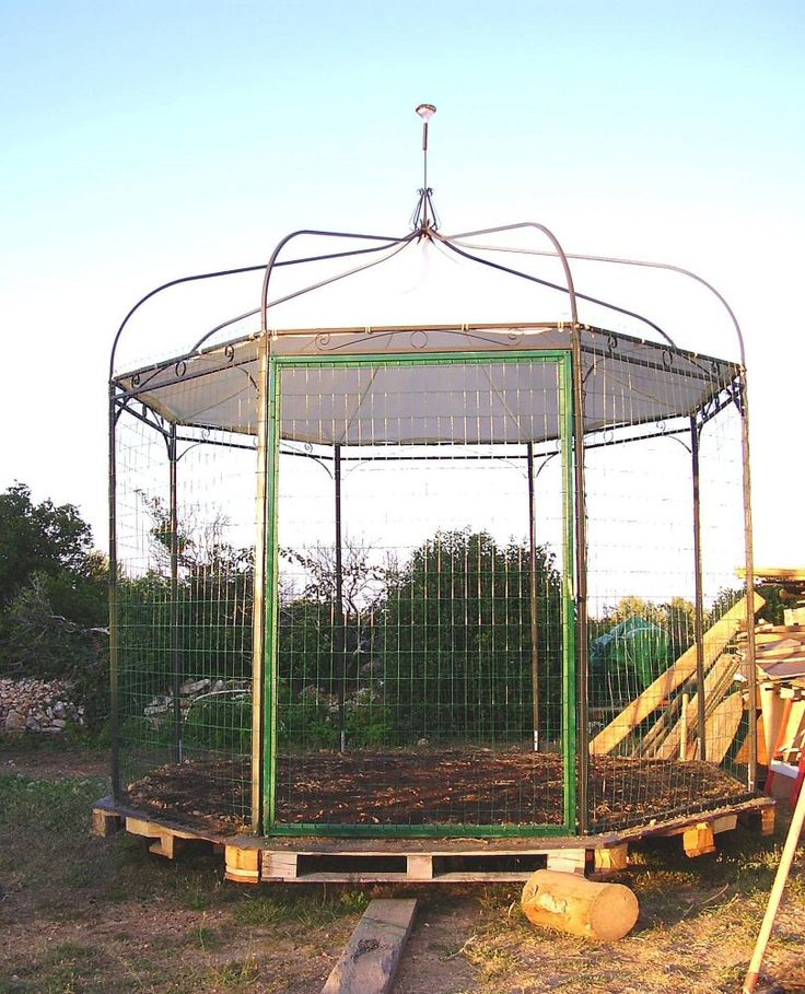Recycled old gazebo into chicken coop gardening for Gazebo chicken coop