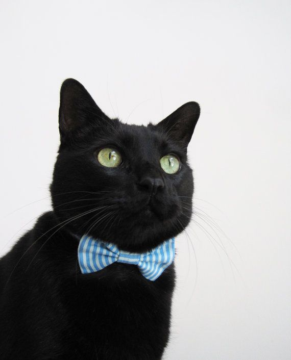 14 best images about cats in bow ties on