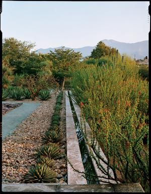 A botanical garden in Oaxaca, Mexico, illustrates the relationship between plants and culture, with a wide mix of plants, textures, and colors.  The distinctive walkways parallel a canal flanked by Agave macroacantha on the left and fouquieria on the right.