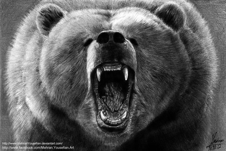 Angry Grizzly Bear_ Drawing By Mehran Yousefian by MehranYousefian.deviantart.com on @DeviantArt