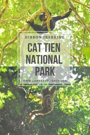 Cat Tien National Park is a great place to go Trekking with wild gibbons! In fact its one of the only places in the world to see these endangered animals. This Vietnamese National Park is full of beauty and the monkeys are just the icing on the cake for this adventure travel destination in Asia!
