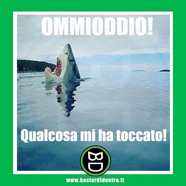 Anche gli #squali sono piuttosto impressionabili! #bastardidentro #mare www.bastardidentro.it