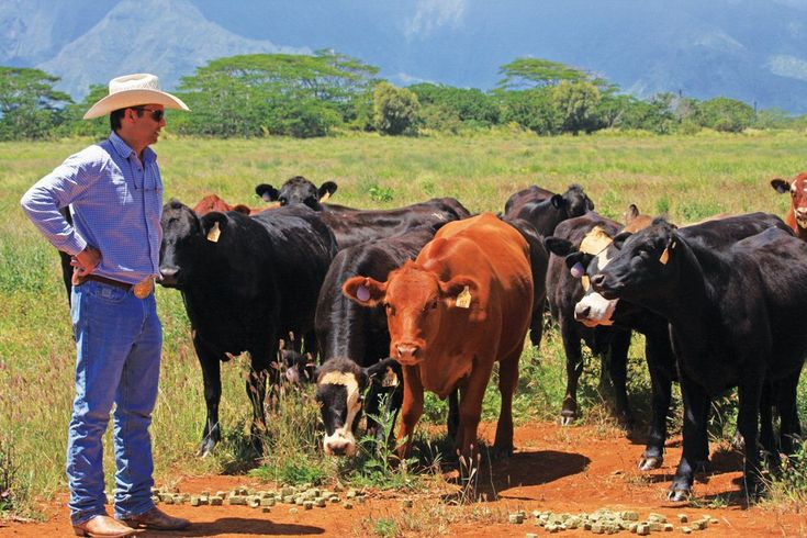 In the rain shadow of one of the wettest spots in the world, at 39 feet of rain per year, is the Kunoa cattle ranch on the Hawaiian island of Kauai. It is