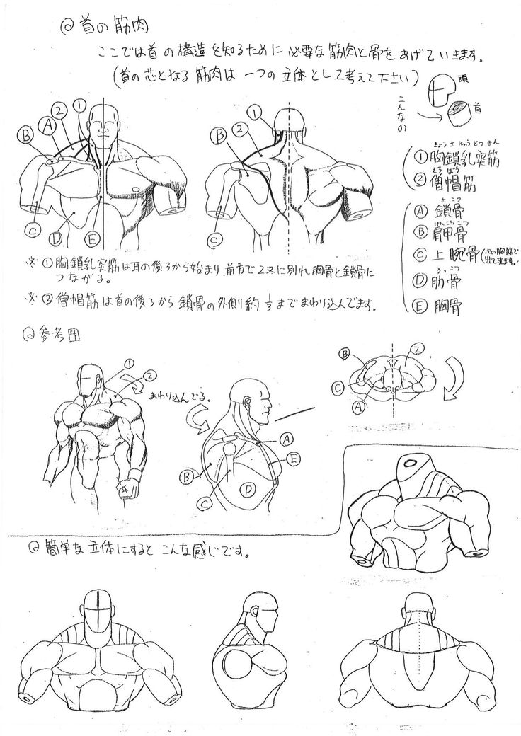 Over twenty years ago, Capcom created an anatomical reference guide that is apparently still in use today when bringing characters to life.