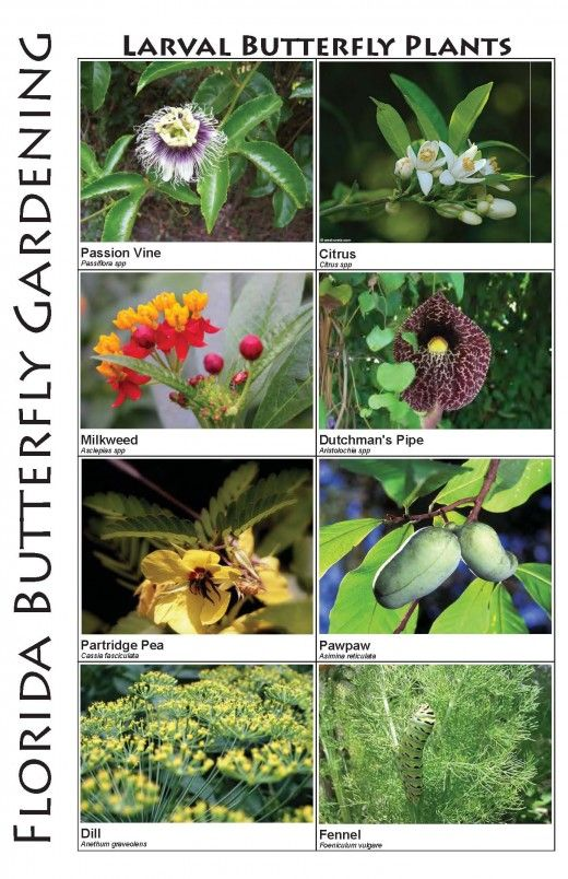 17 best images about native florida gardening on pinterest