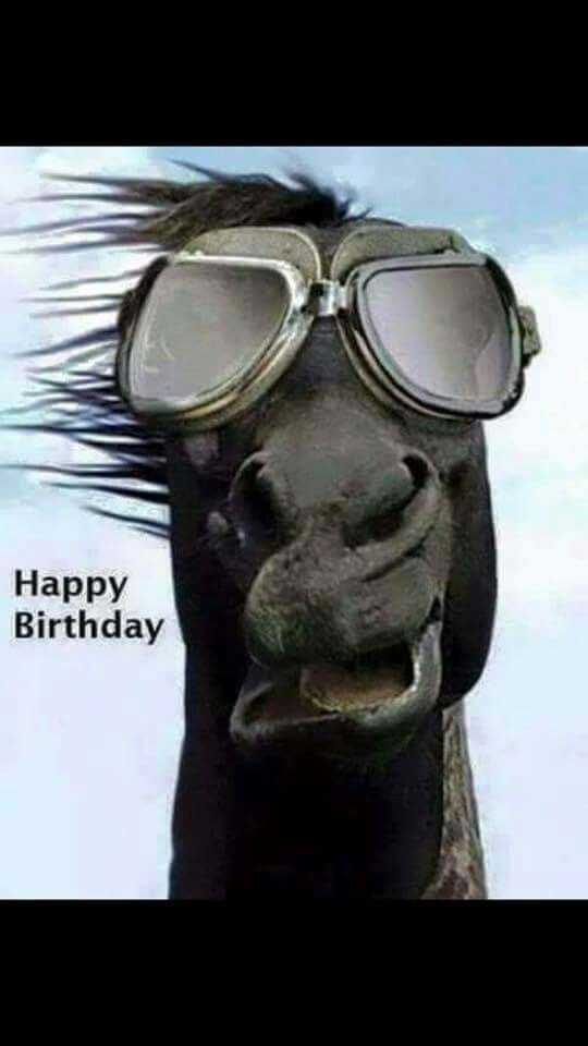 Happy Birthday Weirdo Quotes: Funny Horses, Horses, Funny Animals