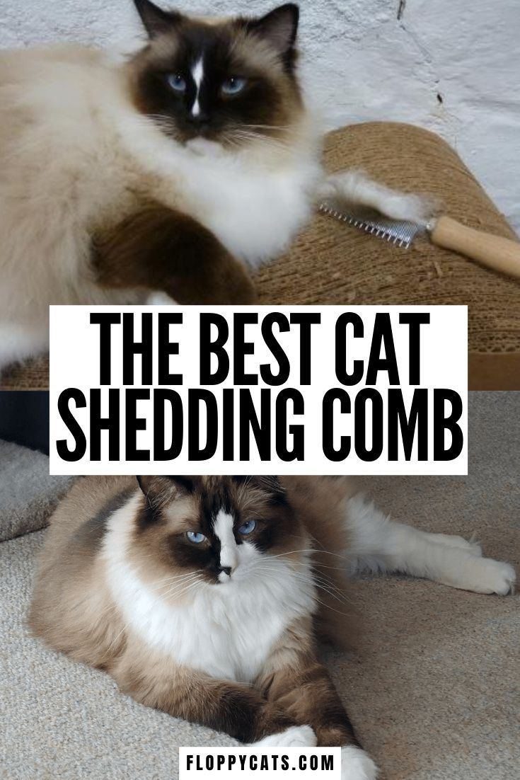 Best Cat Shedding Comb Combing Ragdoll Cats With The Safari Comb Floppycats In 2020 Cat Shedding Cat Grooming Tools Kitten Care