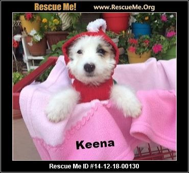 Rescue Me ID: 14-12-18-00130Keena (female)  Maltese Mix    Age: Young Puppy  Personality:	 Average Energy, Average Temperament  Health:	 Spayed, Vaccinations Current       Lets face it, this 10 wk old puppy is just as cute as the next! Mama is the pure white Ellen (Maltese and Poodle) who just got adopted and the daddy is unknown. What we do know is the puppies are ALL cute and full of character. These puppies are not ready to go quite yet. BUT we are taking applications for them. *This ...