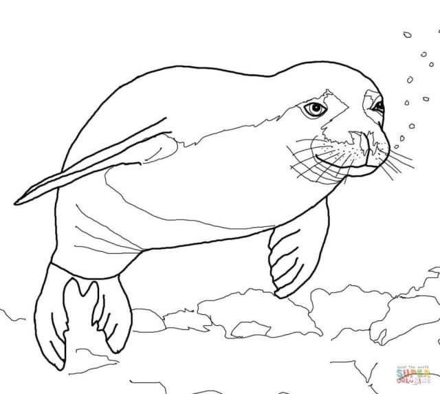 Exclusive Picture Of Seal Coloring Pages Albanysinsanity Com Coloring Pages Free Coloring Pages Monk Seal