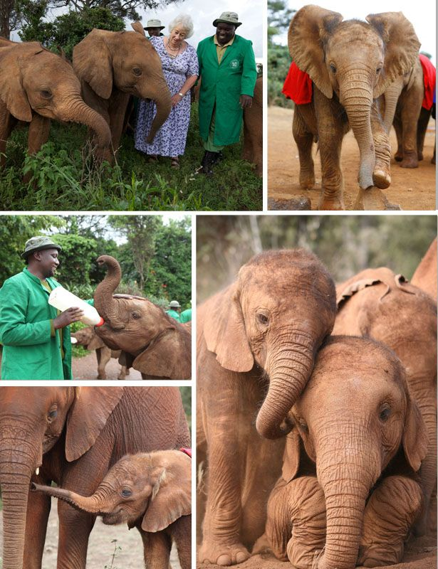David Sheldrick Wildlife Trust Elephant Orphanage. Thank you for looking after those precious animals.