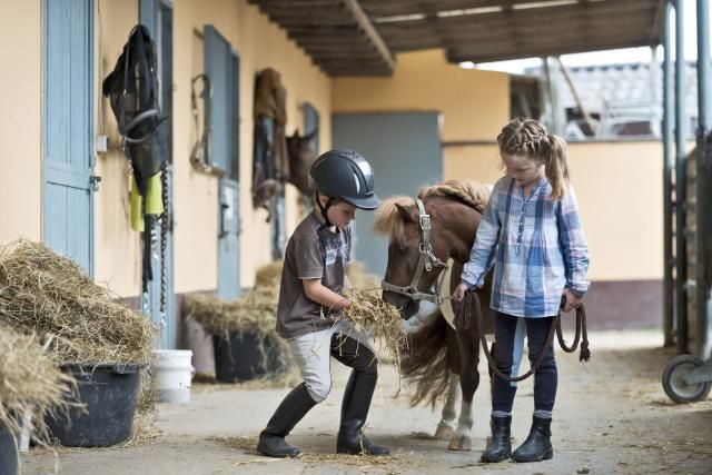Learn about the best horse and pony breeds for children. Find out the most suitable breeds for your child's first pony.