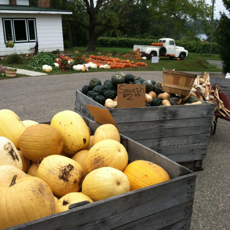 Corey Lake Orchard in Three Rivers, Michigan. Pumpkins and Squash. #coreylakeorchard #michigan