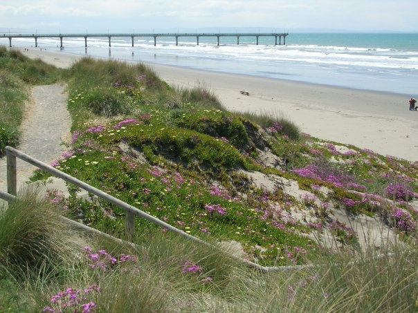 our local beach with new brighton pier in the background, nz