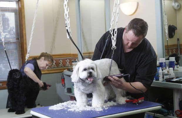 Dog Grooming Somerset Pa