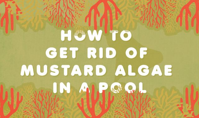 How to Get Rid of Yellow Algae in a Pool