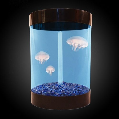 Desktop jellyfish aquarium- this is so cute I want it!!!