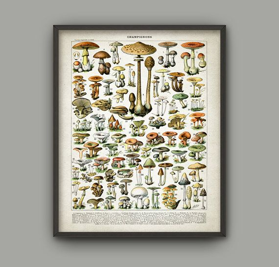 Mushroom Print - Vintage Larousse Mushroom Book Plate Print - Mushroom Illustration - Fungi Art - Fungus Poster - Botanical Science AB448  Printed using high quality archival inks on heavy-weight archival paper with a smooth matte finish. A fantastic gift or a fabulous addition to your home!  Please choose between different sizes.  ---------------------------------------------------------------------------------------------  For more botanical and animal prints please visit:  http:/&#x2F...